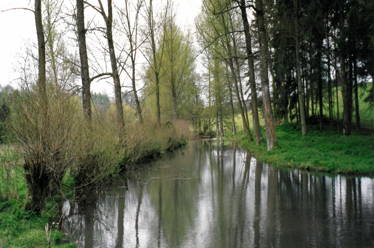 Willow trees growing by the water